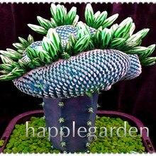 Распродажа 200, редкие африканские смешанные плантации, кактус, суккулент, растение, дерево, очищающее воздух, бонсай, в термостойком легком уходе, креативное растение