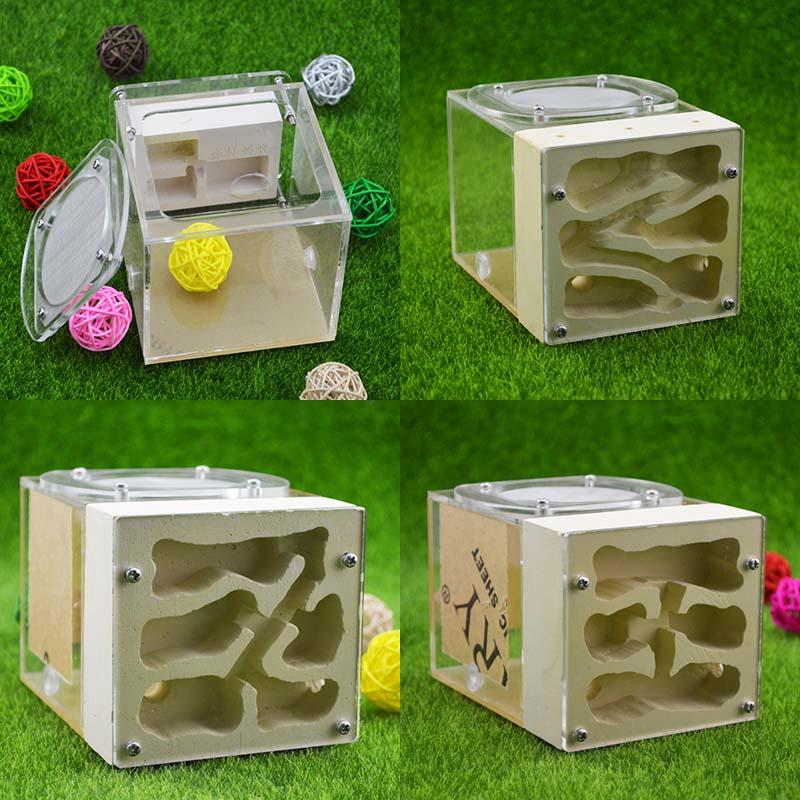 Creative Acrylic Gypsum Hybrid Eco Pet Breeding Nest Ants Farm House Insect Collection Box
