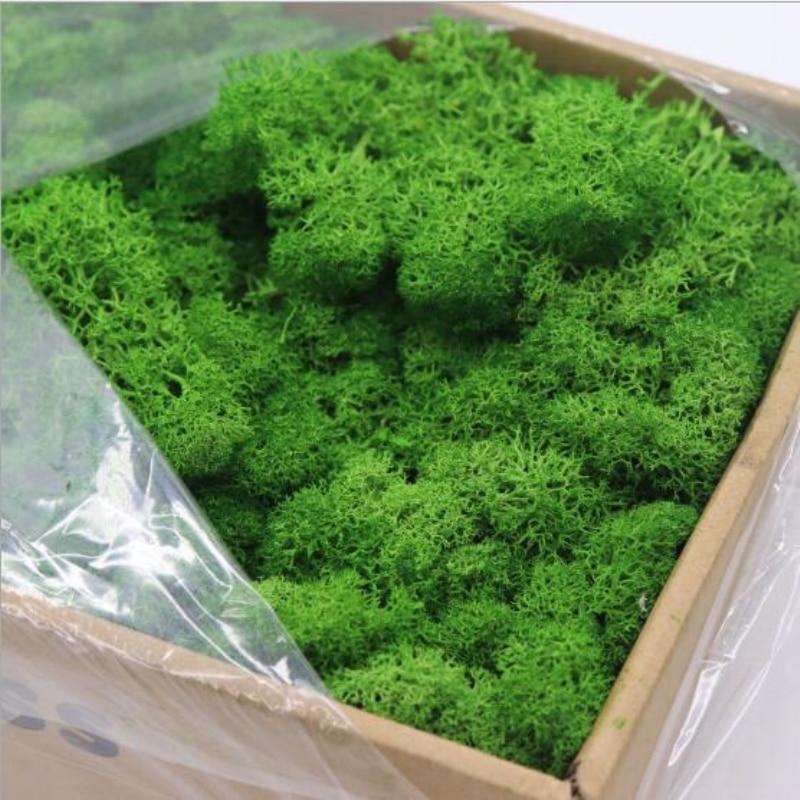 20g Reindeer Moss Preserved Floral Decorative Moss For Dressing