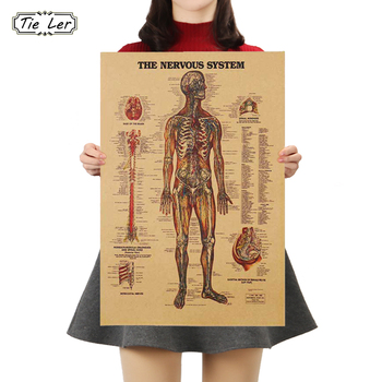 цена на TIE LER Adesivo De Parede Vintage Style Retro Paper Poster Giftsthe Muscles Of The Body Structure Wall Sticker