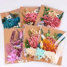 Sticker-Decor Photo-Frame Flower-Materials Dried Valentine's-Day-Gifts Eternal Natural