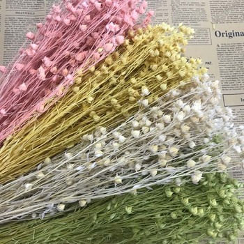60-70g/30-40PCS,Decorative Natural Dried Bead Flowers Bouquet Preserved Jequirity Branch,Mini Fruit Jumble-Beads For Home Decor image