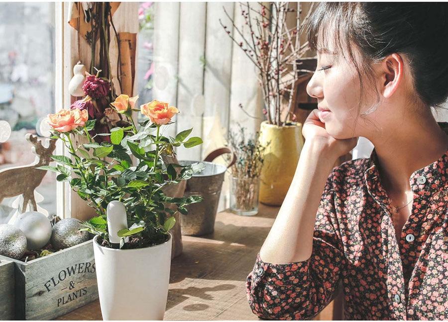 Image 4 - Oryginalny Xiaomi Mijia Mi kwiat Monitor rośliny trawa gleby lampka wodna inteligentny Tester dla Xiaomi Flora Monitor czujnik ogród HHCCsensor sensorsensor for lightsensor xiaomi -