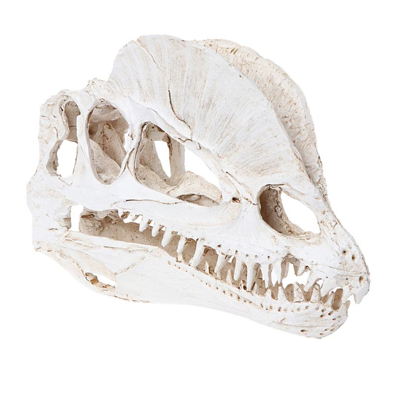 Dilophosaurus Dinosaurier Schädel Harz Handwerk Fossilen Skelett Lehre Modell Halloween Home Büro Dekoration Ornament