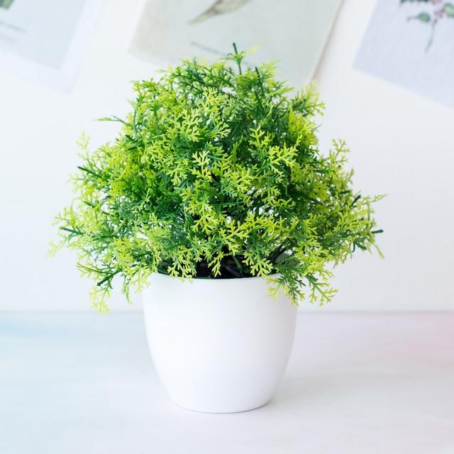 Planta antimosquitos Asparagus 6