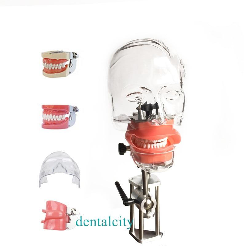 Head Model Dental Simulator4000074621961 Phantom Head Model With New Style Bench Mount For Dentist Teaching Model