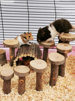 Apple wood Hamster Toy Ladder Small Pet Stairs Step Fitness Exercise Toy Hammock Playground Pet Feeder for Small Pet 5