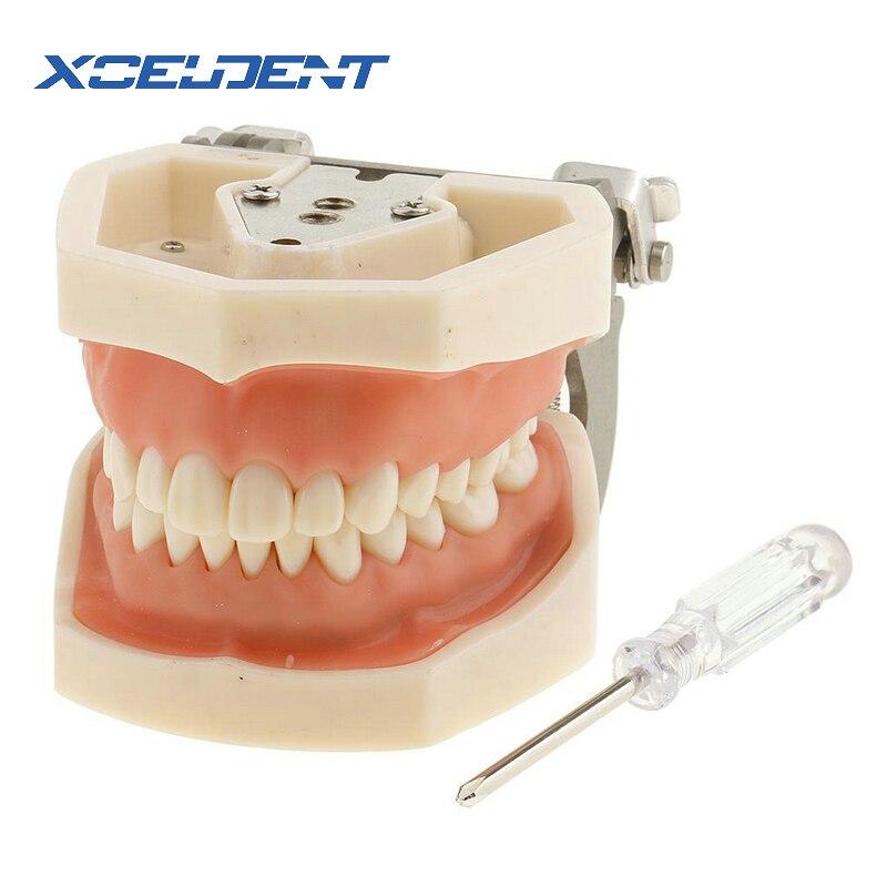 1pcs Soft Gum All Removable Dental Teeth Model 28pcs Teeth Dental Model For New Dentist Traning In The School