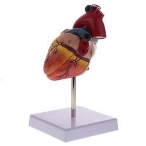 Image 5 - Cuore umano Anatomia anatomico modello medico Visceri Emulational Organo Modelli di Insegnamento scienza aiuti giocattolo