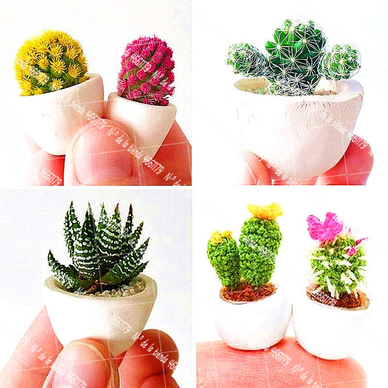50Pcs/Bag Mini Cactus Bonsai Plant Family Garden Flower Decoration Plant Potted Plant Flower Succulent Potted Planting