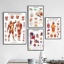 Sistema de anatomia do corpo humano cartazes e impressões quadros de pintura em tela na parede hospital gráfico decorativo decoração para casa affiche