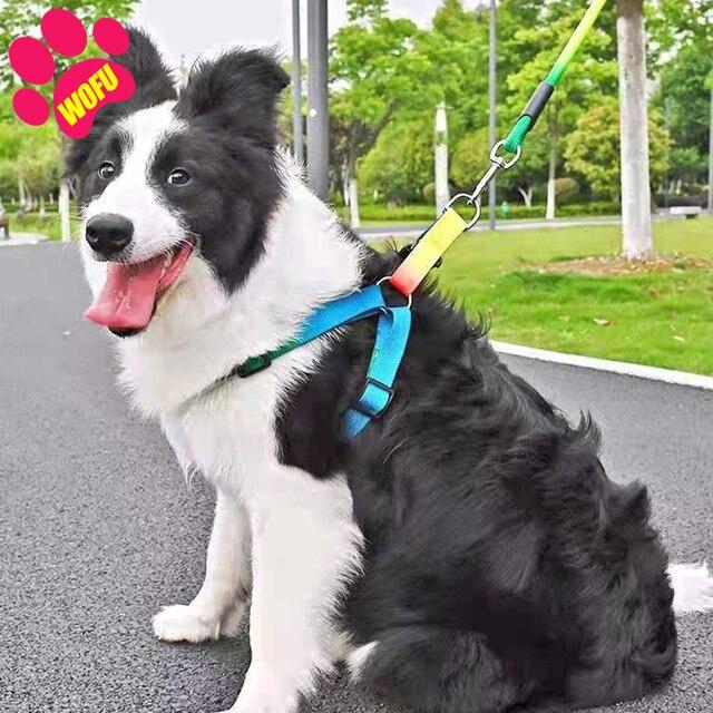 Rainbow Dog Leash & Harness - Luxury Cat Leash & Harness  2