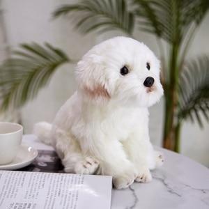 Image 4 - חדש באיכות גבוהה סימולציה מלטזית כלב בפלאש צעצוע רך קריקטורה בעלי החיים כלב ממולא בובת עיצוב הבית תינוק ילד מתנת יום הולדת