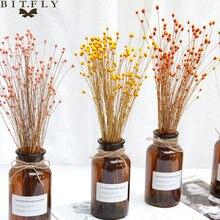 50 шт сухоцветы натуральные настоящий счастливый цветок маленькие