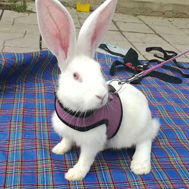Nieuwe Zwarte Konijn Leash Lead Vest Kleine Dieren Mesh Katoen Halsbanden Kat Hamster Rode Harnassen Sml Harness Leash pet Strap