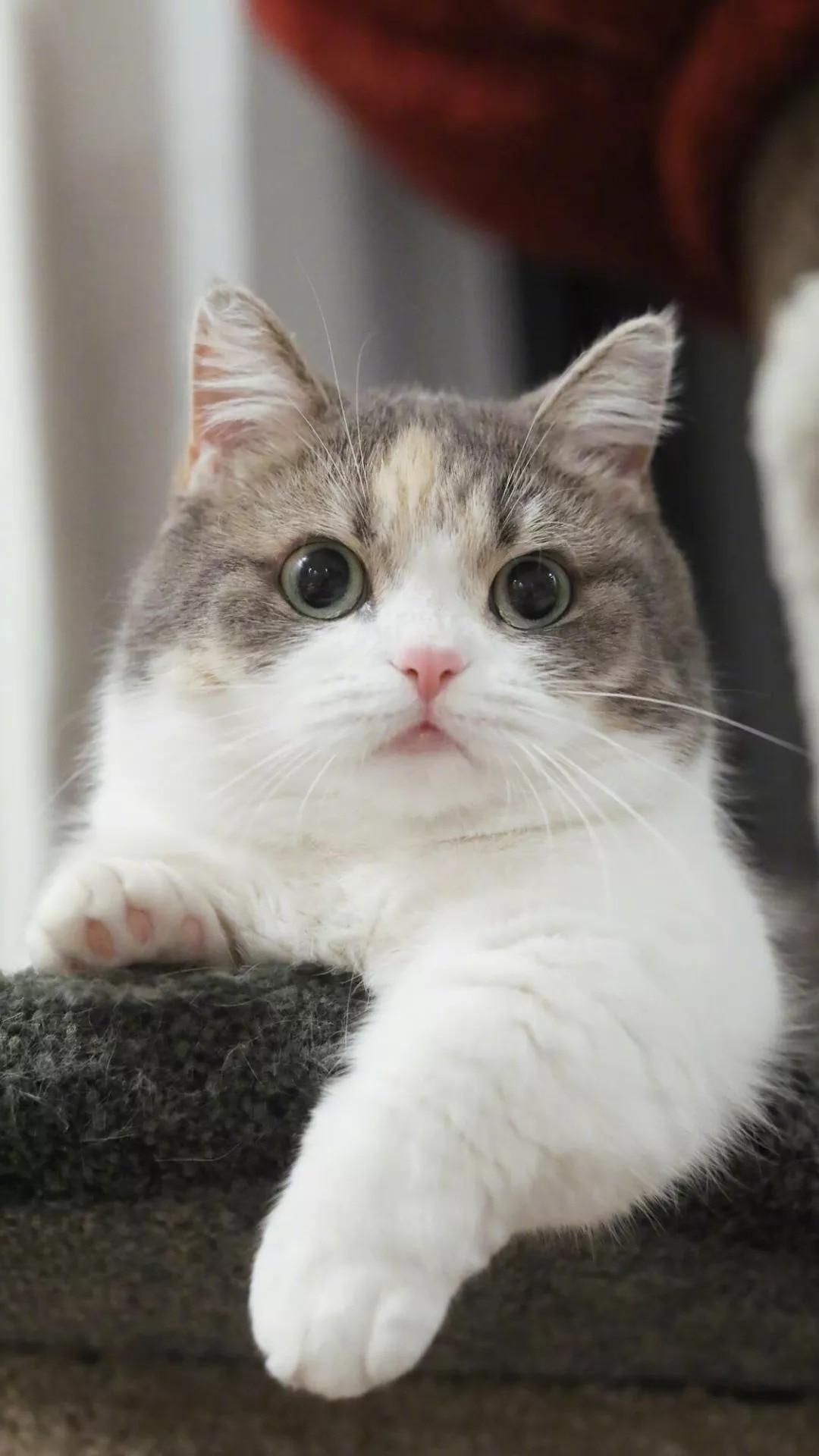 猫片壁纸 :生活不断拍打我们的脸皮,最后不是脸皮厚了,是肿了!插图5
