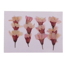 12x Pressed Real Flower Dried Sakura Flowers DIY Phone Case Card Decorations
