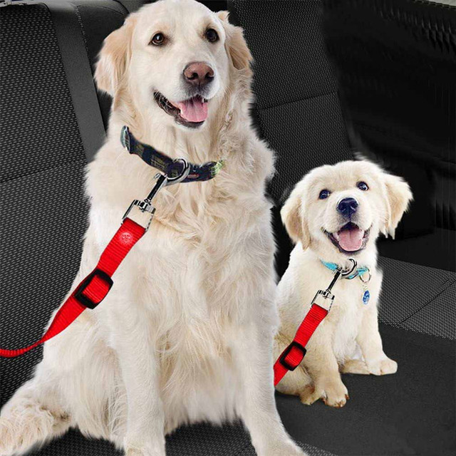 Safety Pet Travel Leash For Dogs & Cats 2
