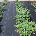Wide0.5 ~ 4 м черный сорняковый коврик растительный сад прополка ткань контроль сорняков анти трава ткань теплица контроль сорняков мат пластик...