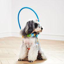 أعمى الكلاب الحيوانات الأليفة الآمن تسخير المضادة للتصادم حلقة الحيوانات الأليفة ضعيفة اللون دليل دائرة حماية الحيوان طوق خواتم