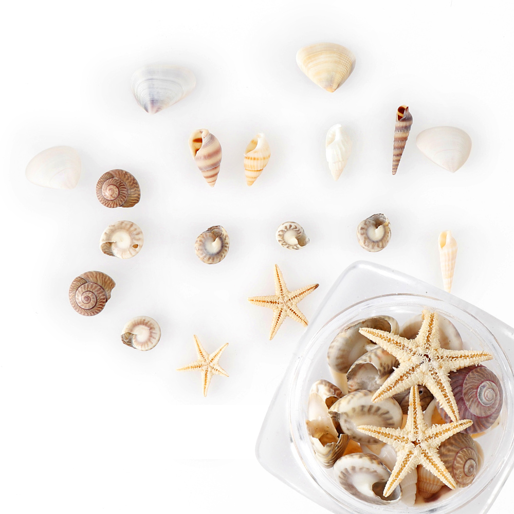1/2/5Box Natural Mini Conch Shells Starfish Sea Beach Ornaments Shell Design Conch Epoxy Mold Filling Home Deco Manicure Tools