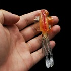 Fishing lures Squidy...