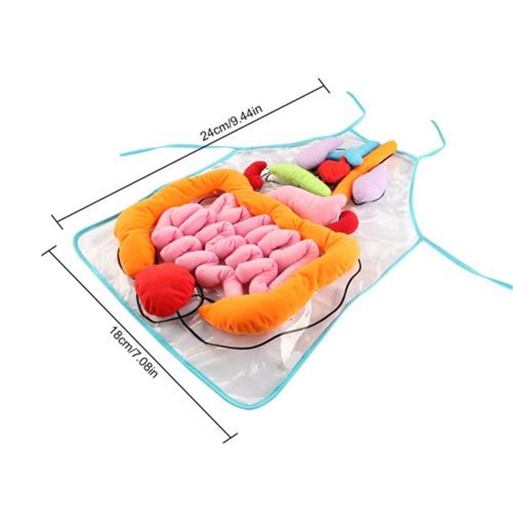 consciencia insights educativos brinquedos para criancas anatomia 01