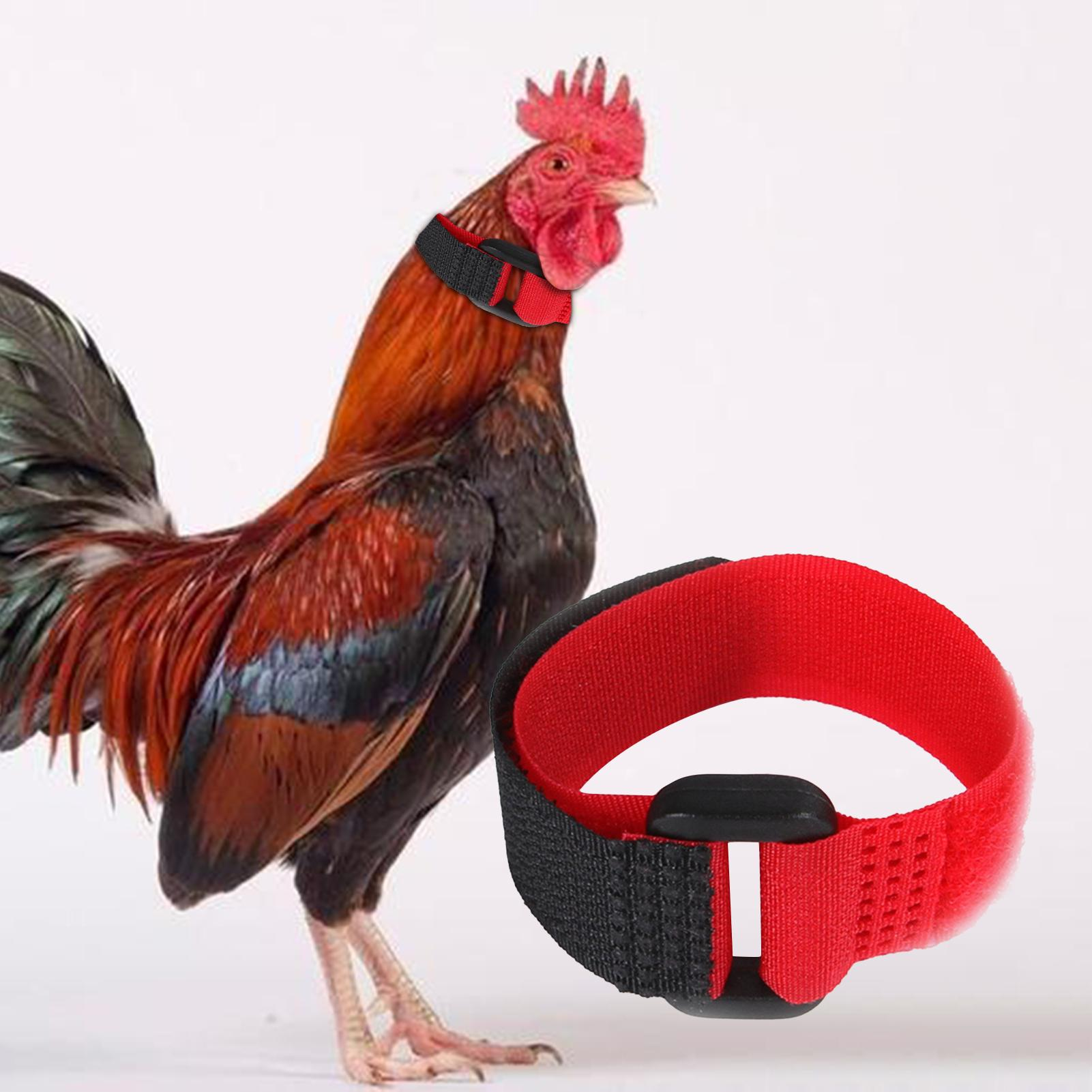 Collar Chicken for Ducks Rooster No-Crow Neckband Noise-Free 1pair Anti-Hook