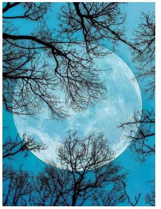 Drzewo księżyc diament haft pełny okrągły diament malowanie naklejki dekoracje tapestry diament dotz obraz diamant kryształowy krajobraz