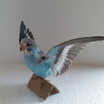 Taxidermy Animal stuffing Eurasian Blue colour Melopsittacus undulatus Budgerigar Budgie Parrot specimen Teaching Decoration