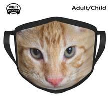 Jovem vermelho tabby tomcat à prova de poeira ao ar livre mais quente máscara de boca gato macho gato gatinho cavala parede doce gato doméstico vermelho jovem pequeno
