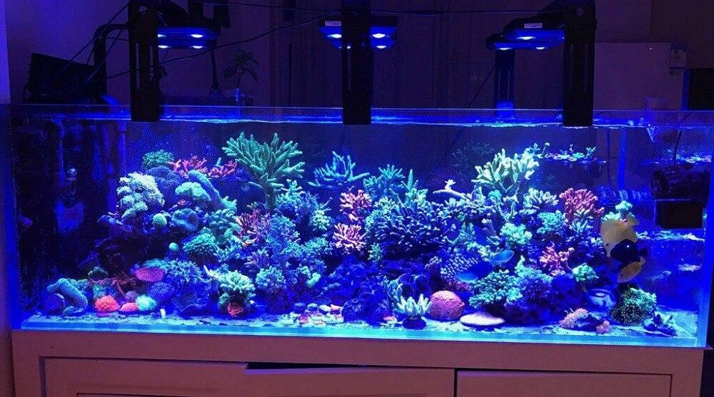 coral marinho sps lps recife luz