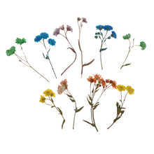 10pcs/ Bag Natural Pressed Dried Flowers Real Press Dry Flowers For Nails Floral Crafts Scrapbooking Card Making Embellishments