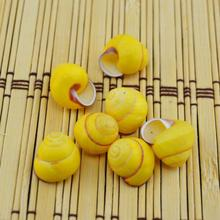 Yellow gold grid Lo Lucky natural  conch shell seashells wholesale small
