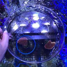 Подводное стекло, нижняя панель, объектив для наблюдения за рыбами кораллов, фото аквариума, морского рифа, резервуара, SPS LPS, Коралловое увел...