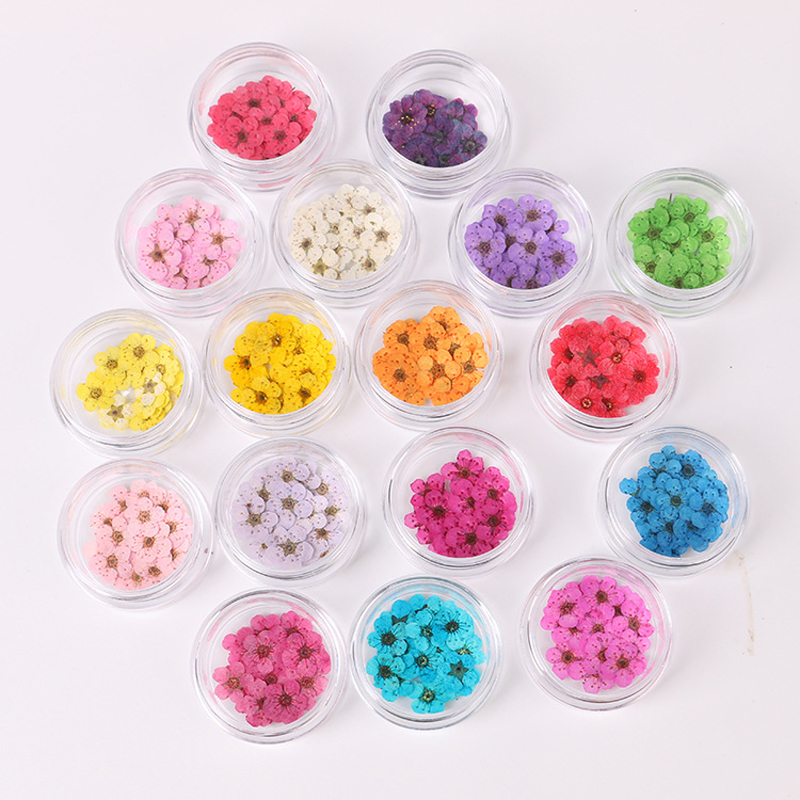 10Pcs /1 Box Real Nail Flowers DIY Natural Dried Flower Nails Art Design Decoration Dry Flowe Manicure Accessories Floral Decals