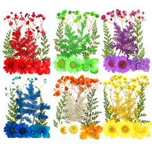 10Pcs/Set Pressed Flowers Yellow Red Orange Blue Green Real Dried Flowers DIY Resin Mold Fillings UV Epoxy For Jewelry Making