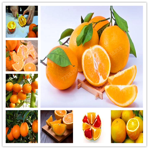 20 Pcs/ Bag Cheap Edible Oranges Fruit Mandarin Penzai Tree Citrus Pots Plants Mini Garden Juicy Sweet Garden Orange Sementes