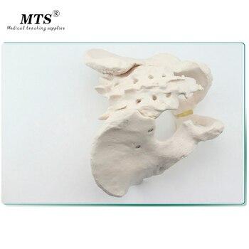 цена на PVC Hi-Q Human Anatomy Pelvis Model Medical Male Human body Model Didactic Skull Medical Science Mannequin Body Handmade