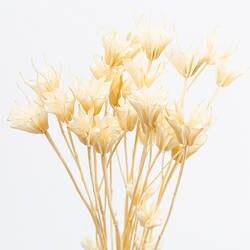 Восьмиугольные цветы натуральные сухоцветы букет гостиная офисное украшение черный угол сохраненные свежими цветок подставка под фото
