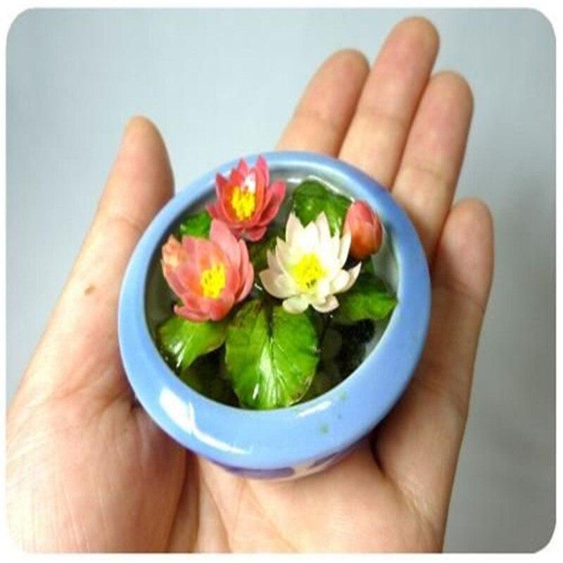 10 Pcs/Bag Lotus Flower Material Mini Lotus Bowl Lotus Water Lily Flores Perennial Plant Essential Oil For Home Garden Decorat