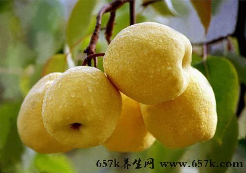 肺炎吃什么 常吃梨子帮你治这个病