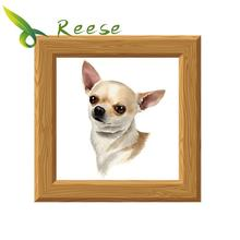 Diy Diamond Painting Portrait Of Chihuahua Full Round Embroidery A Dog Picture Decoration For Home Hobby Gift Family