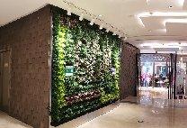 """【杭州植物墙】国大城市广场 种植袋式换成""""秀根""""模块化绿植墙【星巴克咖啡厅门口】"""