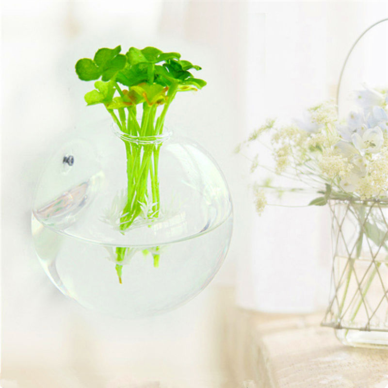 Globe Shaped and Hanging Terrarium Ball and Transparent Glass Pot to Grow Plants Indoor 9