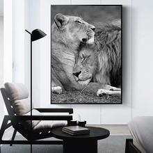 Современные Африка фотографии животных Черный и белый лев Семья