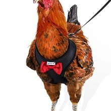 Куриный жгут курицы размер с 6 футов соответствующие поводок-регулируемый, эластичный, удобный дышащий
