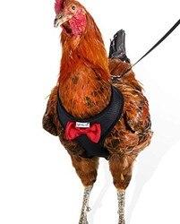 Taille de poule de harnais de poulet avec la laisse assortie de 6ft-réglable, résilient, respirable confortable