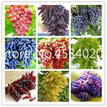 Hot Sale!30 pcs Rare finger grape plants Organic Heirloom fruit plants,Natural growth grapes tree bonsai for home garden(China)