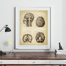 Impresión médica del cerebro cabeza humana anatomía Vintage ilustración cartel Arte de la ciencia de la neuología lienzo pintura imagen Doctor regalo